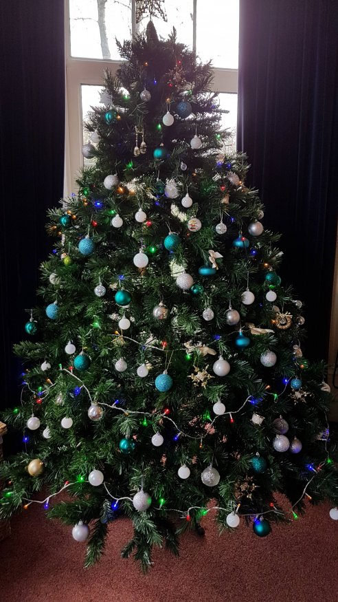 The first tree to go up at St Petrocs in Bodmin…..