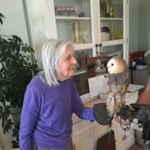 Primrose House - Owl Visit