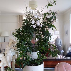 Kent House - Plant donated from Waitrose